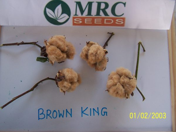 brown king cotton